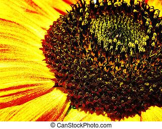 arrière-plans, sunflower., naturel, résumé