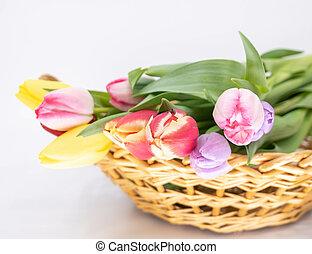 arrivée, bouquet, tulipes, printemps