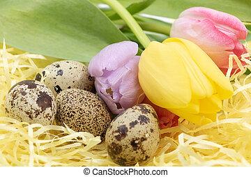 arrivée, bucolique, tulipes, oeufs, printemps, caille, pays,...