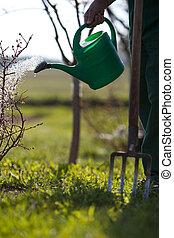 arrosage, jardin