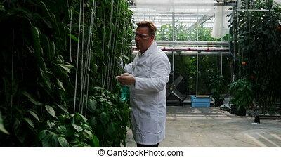 arrosage, scientifique, plante, serre, 4k