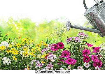 arroser fleurs, jardin