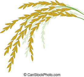 arroz branco, desenho, fundo