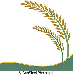 arroz, diseño, blanco, plano de fondo