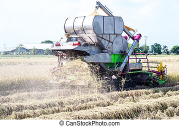 arroz, máquina segador de cosechadora, cosechar