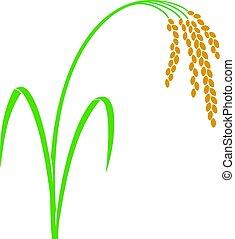 arroz, vector, ilustración
