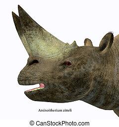 arsinoitherium, 포유동물, 머리