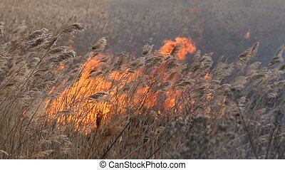 Arson dry grass dangerous rapid spread of fire on the...