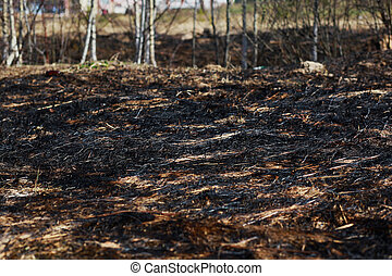 Arson dry grass, forest
