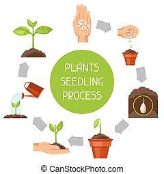 artículos, planta, planta de semillero, imagen, fases,...
