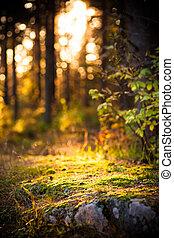 artístico, luz, en, bosque