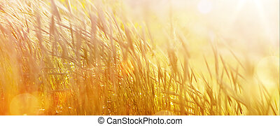 Art abstract natural autumn background; autumnal sunny meadow