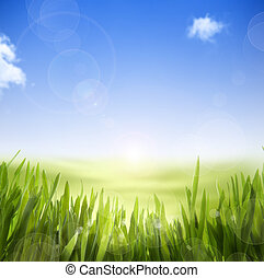 abstract Spring nature background of spring grass and sky