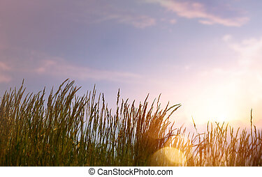 art abstract  summer background with fresh grass against sunset sky background