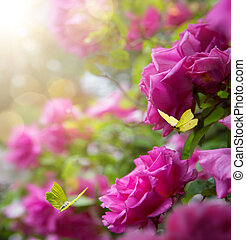 art Beautiful spring flowers and butterfly; roses garden background;