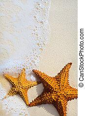 Art beautiful starfish on a beach sand with wave