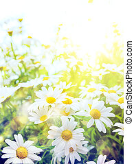 Art Bright summer flowers Natural background