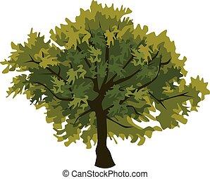 art, chêne, agrafe, arbre