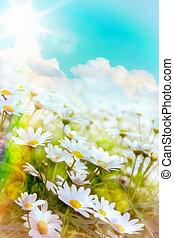 Art high light; Bright summer flowers Natural background