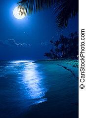 Art Moonlight tropical sea beach night; vacation at the...
