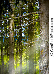 art mountain forest, abstract background