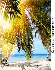 Summer tropical Beach;