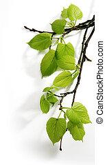art, printemps, branche