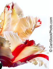 art, printemps, tulipe, beau, fleurs