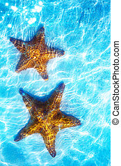 Art real live seastar on a white sand  background