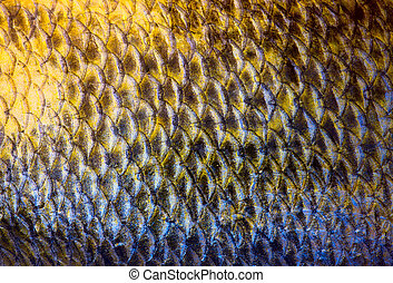 Art Real zander Fish Scales Background - Art Real walleye ...