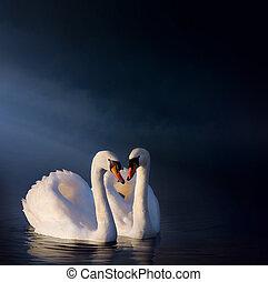 art Romantic swan couple - art love couple of swans