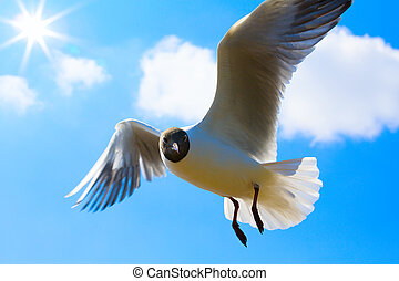 Art Seagull in blue sky background