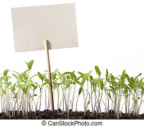 art seedlings of tomato and pointer class - seedlings of...
