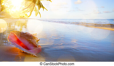 art Shell on the tropical beach background