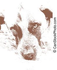 Sight. A homeless dog. - Art. Sight. A homeless dog.