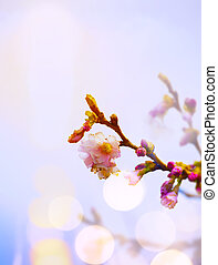 art Spring background with pink blossom
