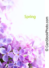 Art Spring  Beautiful lilac Flowers Border background