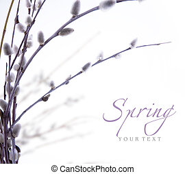 art spring flowering branches of willow - spring flowering...