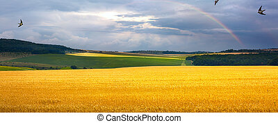 summer field, sunrise and blue sky