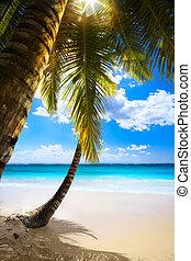 Art sunset on beach Caribbean island, seychelles