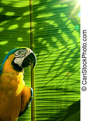 art Tropical island background; parrot on palm tree