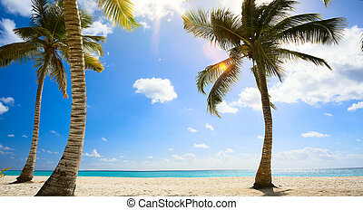 art Untouched tropical beach in caribbean sea