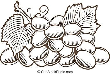 art, vendange, illustration, vecteur, raisins, ligne, style.