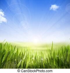 arte, abstratos, primavera, natureza, fundo, de, primavera, capim, e, céu
