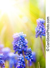 arte, bello, fiori primaverili, fondo