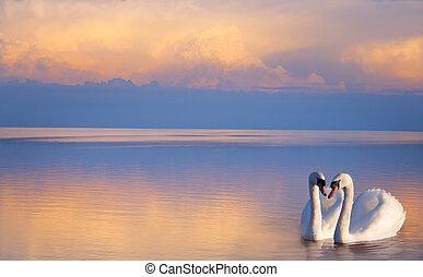 arte, bonito, dois, branca, cisnes, ligado, um, lago