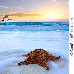 arte, bonito, mar, praia, ligado, um, ilha tropical