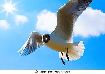 arte, gaivota, em, céu azul, fundo
