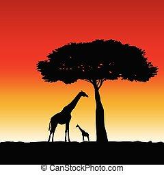 arte, girafa, vetorial, silueta, ilustração