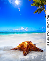 arte, hermoso, mar, playa, en, un, caribe, isla